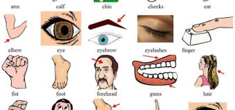 Cùng học từ vựng miêu tả các bộ phận trên cơ thể con người