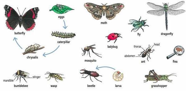 tên các loại côn trùng trong tiếng Trung