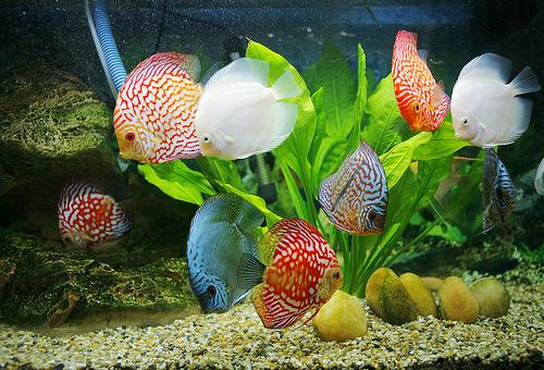 Tên các loại cá trong tiếng Trung