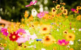Từ vựng tiếng Trung các loài hoa ( p2 )