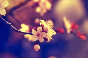 """Học tiếng Trung với cấu trúc """" 要(yào) 是(shì) …… 那(nà) 么(me) …… """""""