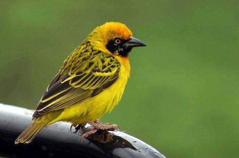 Từ vựng tiếng Trung các loại chim