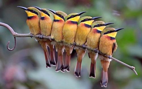 Từ vựng tiếng Trung các loại chim ( p2 )