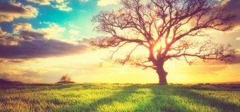 Thấu hiểu triết lý tự nhiên – Lời hay ý đẹp (p6)