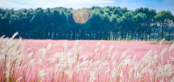 """Những từ tiếng Trung vừa độc vừa lạ phải gọi là """"bá đạo trên từng hạt gạo"""""""