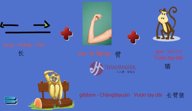 Hình ảnh Học từ vựng tiếng Trung qua hình ảnh dễ học nhớ lâu 3