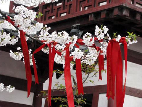 Hình ảnh Các loài hoa của Trung Quốc nổi tiếng đi vào thơ ca 4