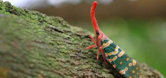 71 tên loài côn trùng bằng tiếng Trung