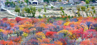 Du lịch Trung Quốc mùa nào ở đâu thì hợp lý nhất?