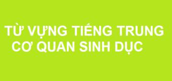 Từ vựng tiếng Trung về cơ quan sinh sản
