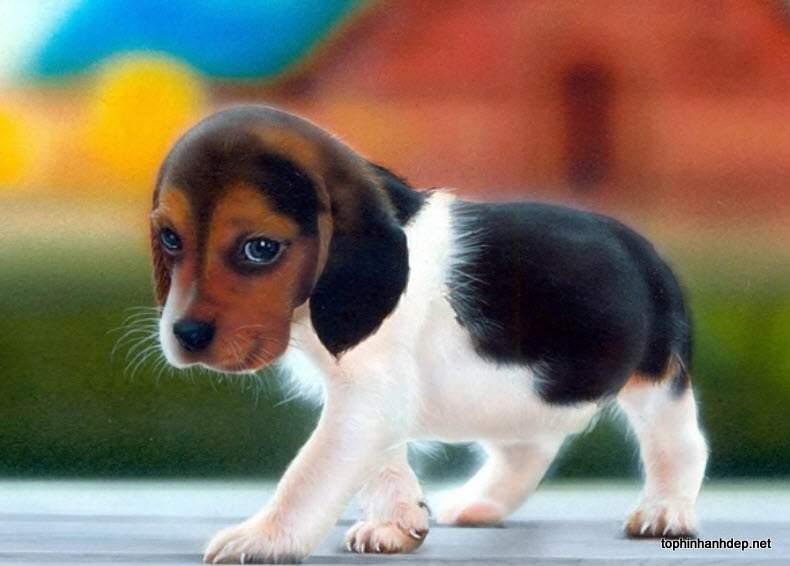Hình ảnh Văn mẫu: miêu tả con chó bằng tiếng Trung 1