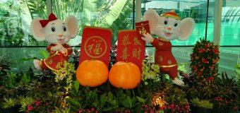 Quan niệm của người Trung Quốc về năm con chuột