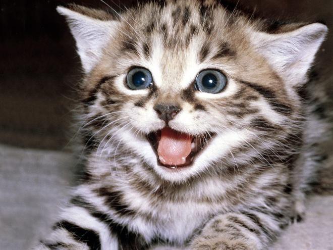 Hình ảnh Văn mẫu: Miêu tả con vật bằng tiếng Trung mà bạn yêu thích 1