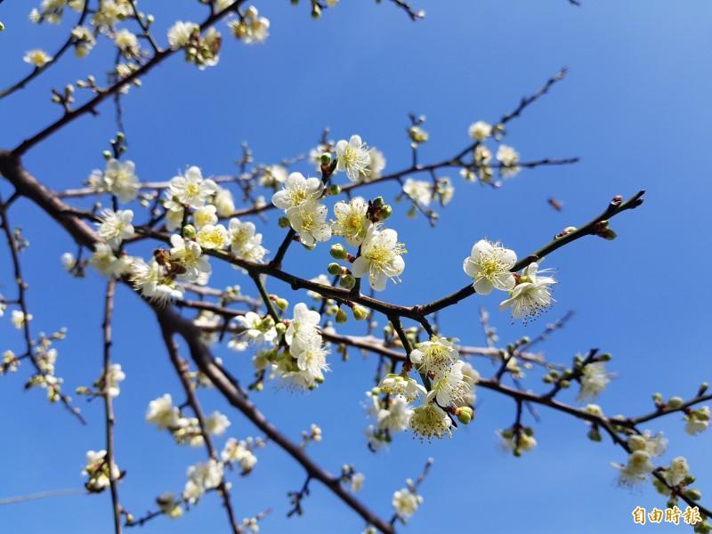 Hình ảnh Tên các loài hoa của Trung Quốc và ý nghĩa 1