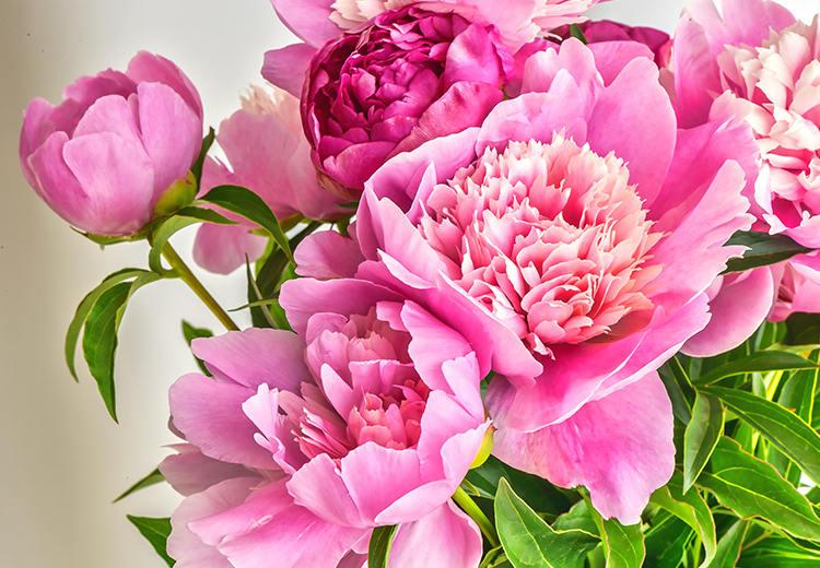 Hình ảnh Tên các loài hoa của Trung Quốc và ý nghĩa 2